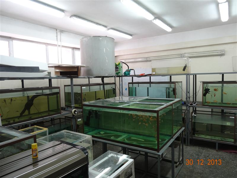 Center for the cultivation of ornamental fish species